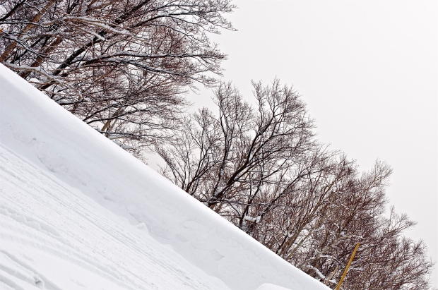 White - Niseko Skiing